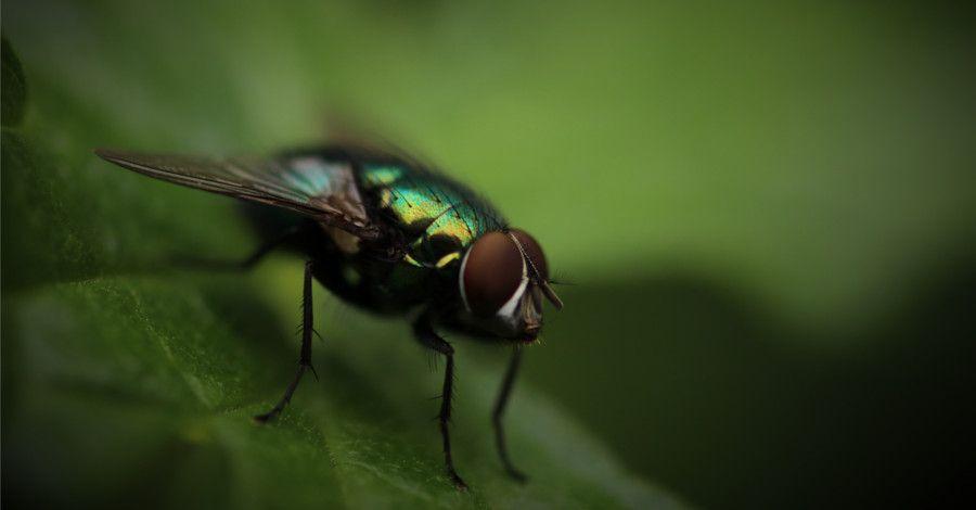 Návod na domáci odpudzujúci sprej proti muchám
