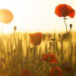 Ktoré kvety vyfarbia vašu záhradu na jeseň? Tieto kvitnú práve v tomto období